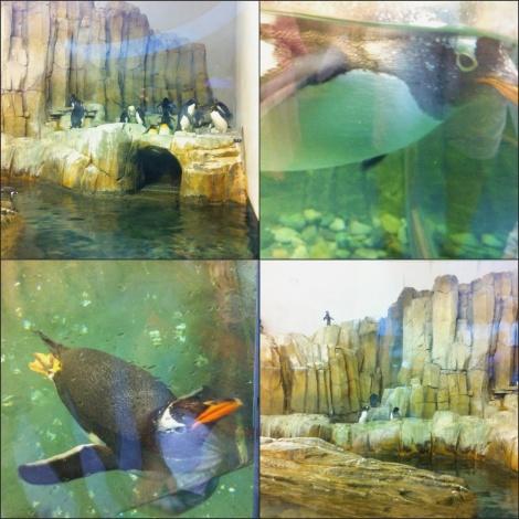 Penguins. No caption needed.